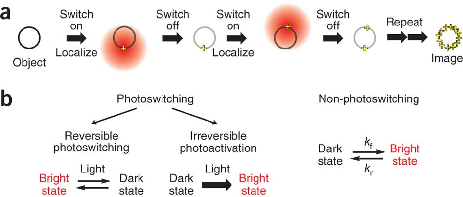 Principle of single-molecule localization–based super-resolution imaging and modes of switching used for this imaging method.