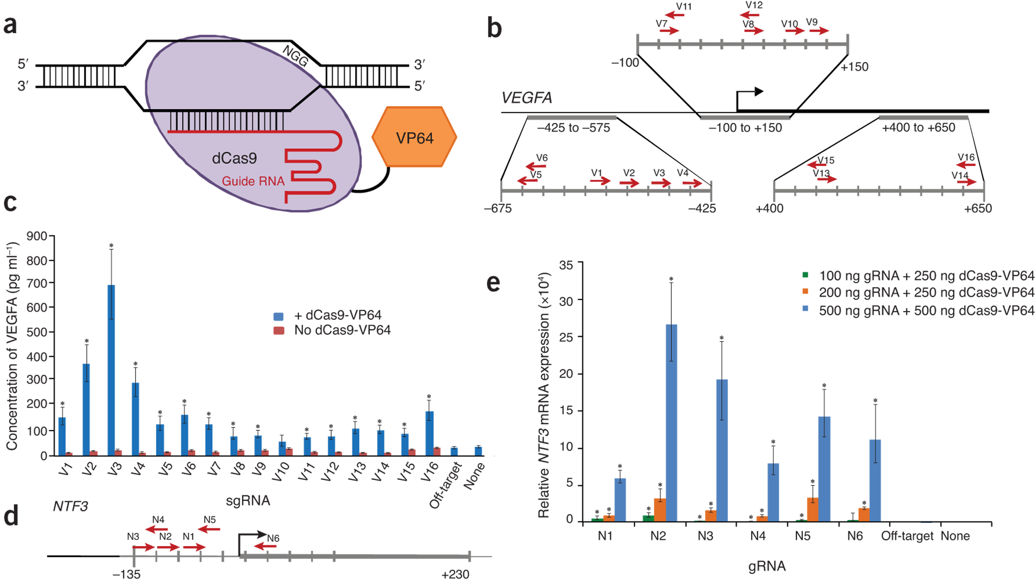 RNA-guided activation of endogenous human genes.