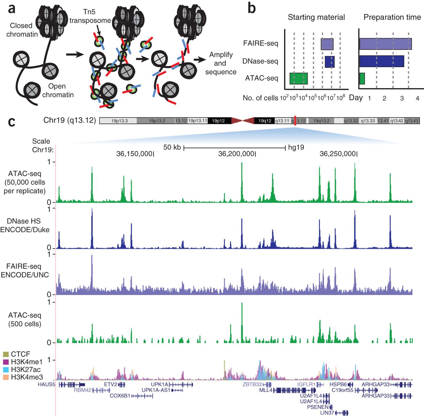 ATAC-seq probes open-chromatin state.