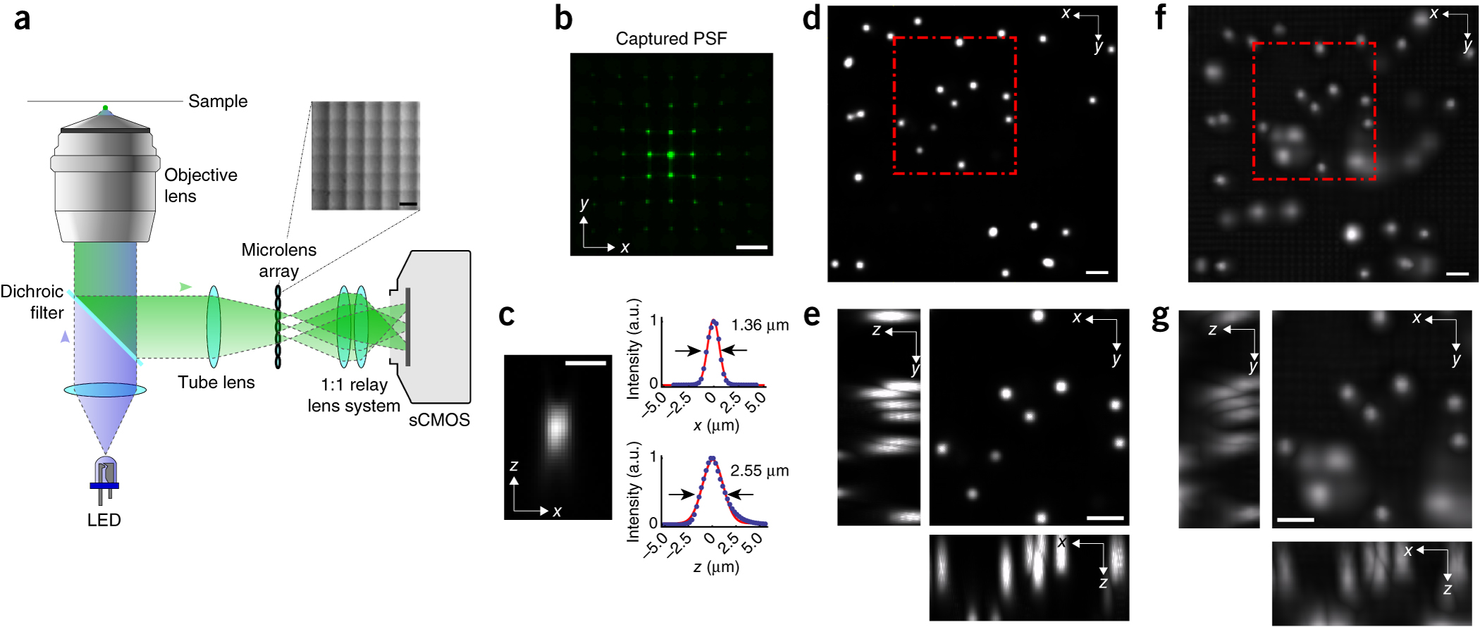 Light-field deconvolution microscopy.