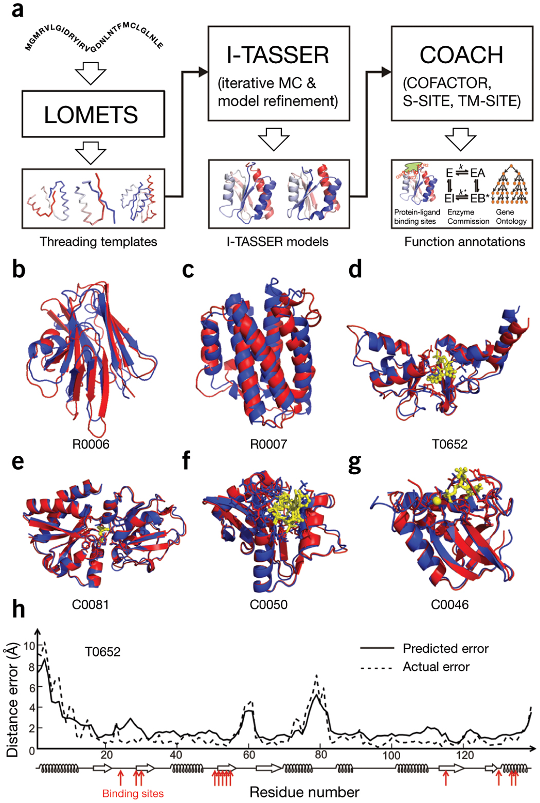 Flow chart and illustrative examples of I-TASSER Suite for protein structure and function modeling.