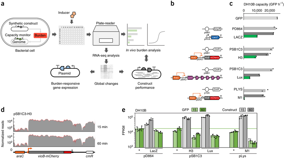 Characterization of host–construct interactions in E. coli.