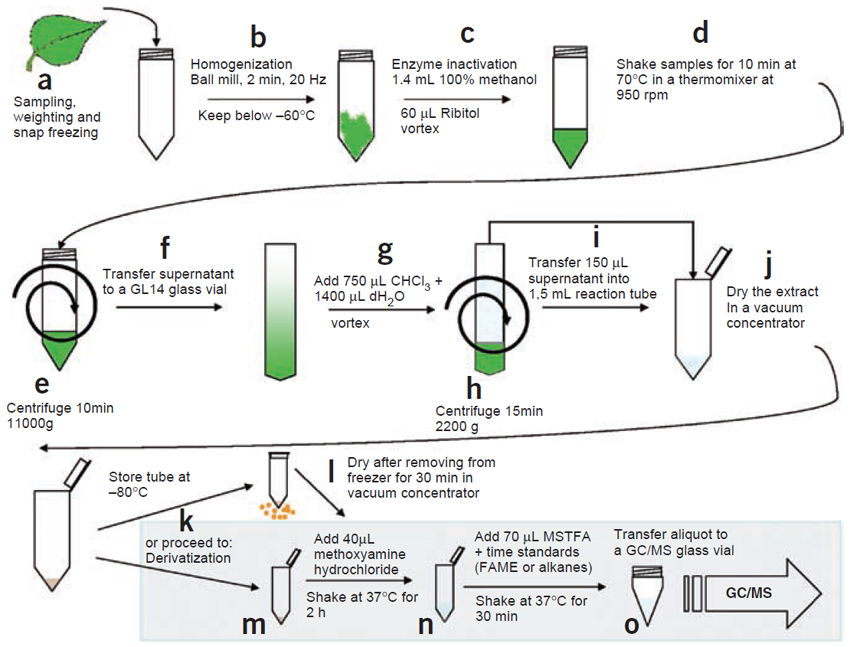 Experimental procedure for extract preparation.