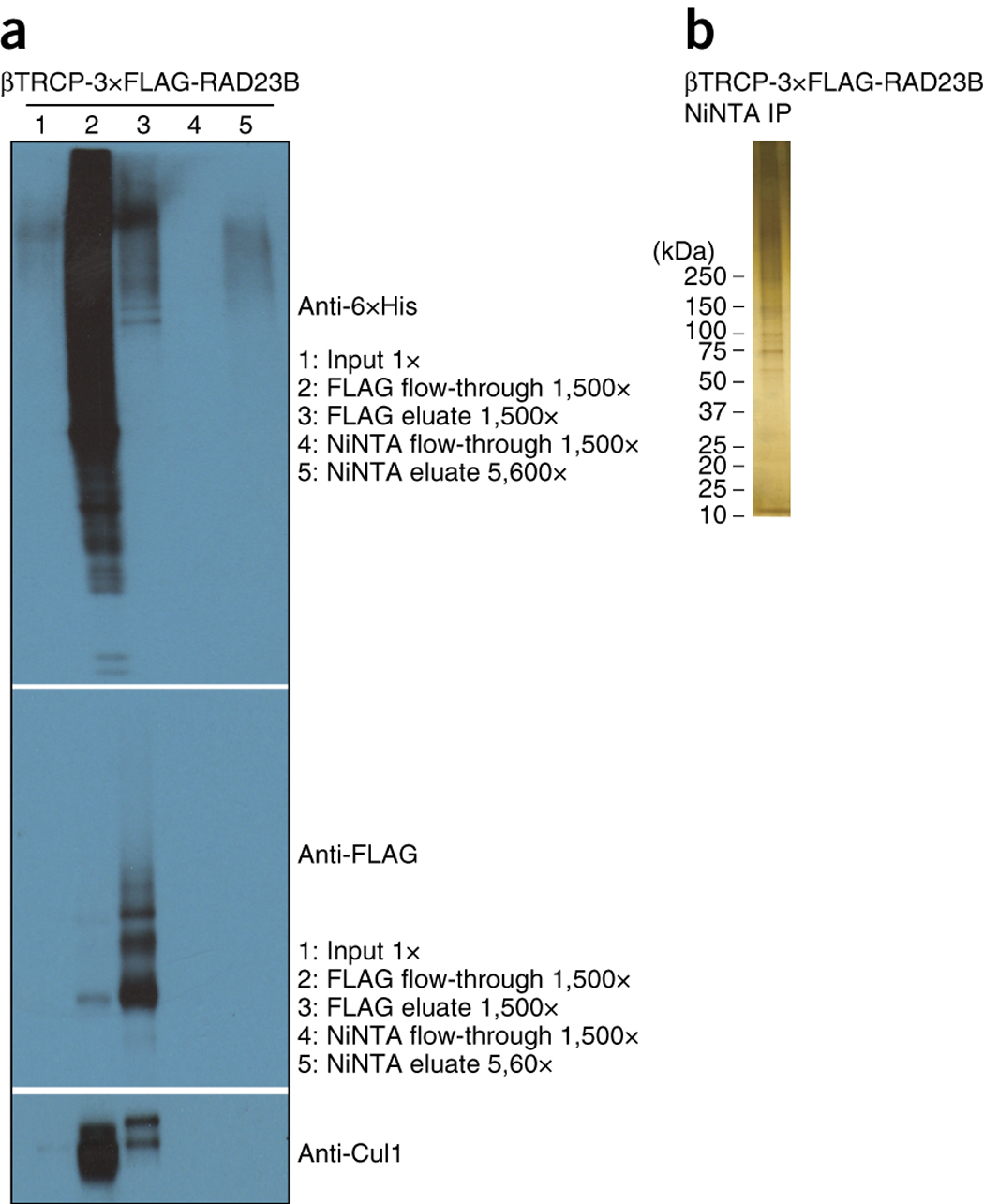 Figure 3 : Quality-control post-purification results for mammalian purification.