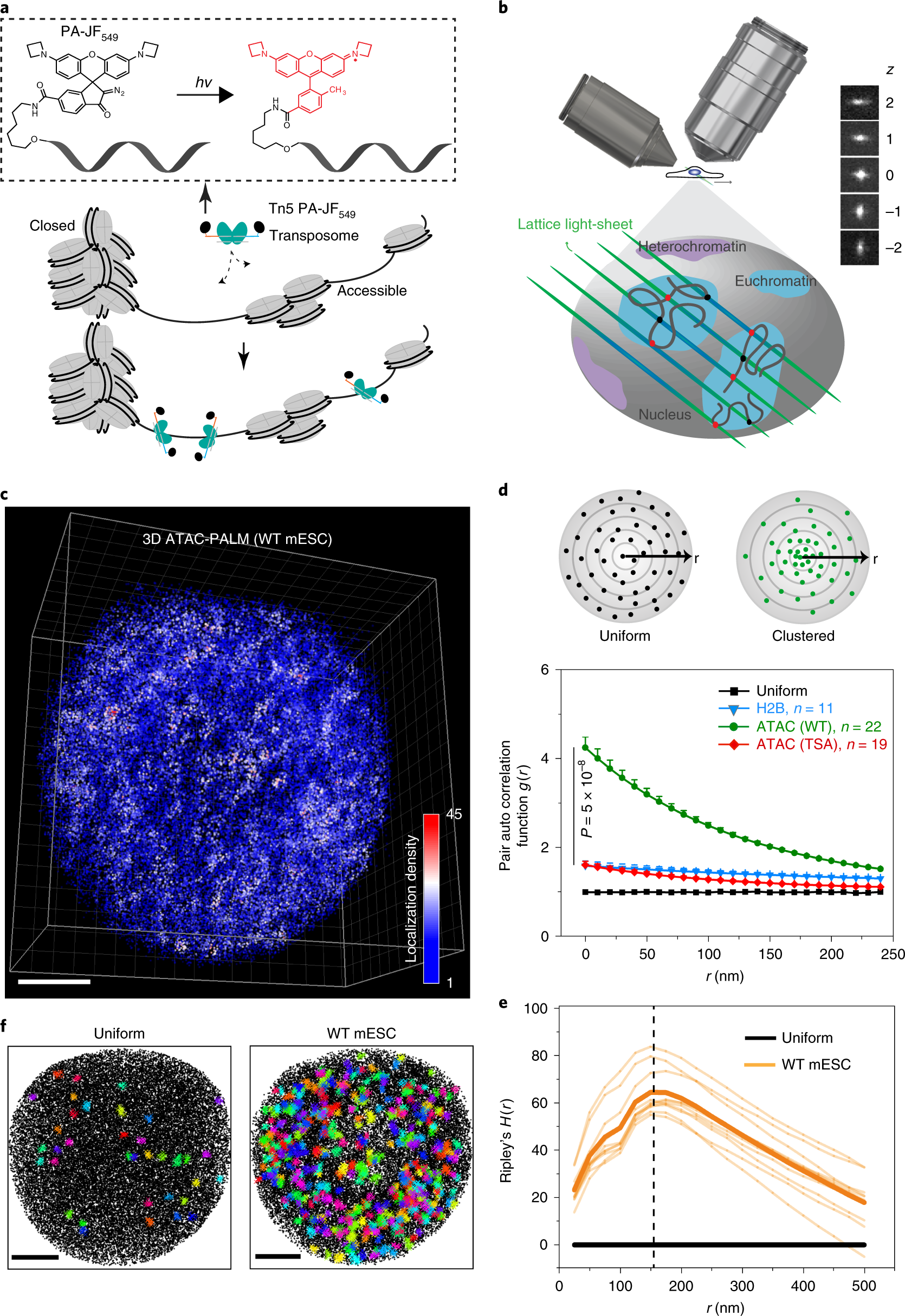 Visualizing the accessible genome topology by 3D ATAC-PALM.